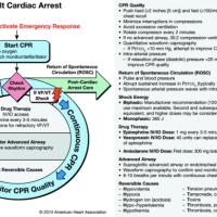 Resuscitation and Fluids
