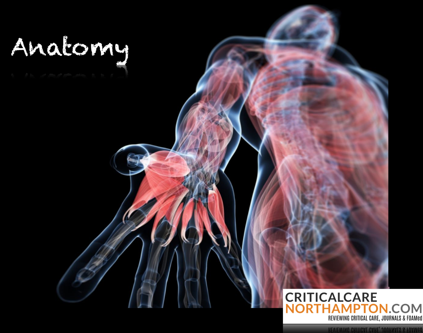 Quick Anatomy Critical Care Northampton